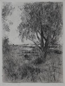 Baum am Haff Aquatinta 32 x 25 cm 1983 200.- €