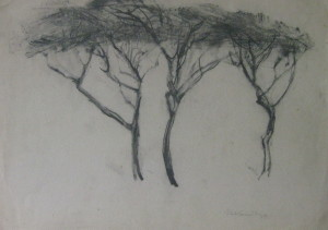 Manfred Kandt aus Serie Bäume auf Hiddensee 1944 Kohlezeichn  29_5 x 42 cm