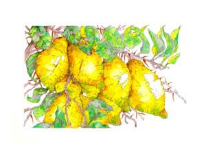 Zitronen_web